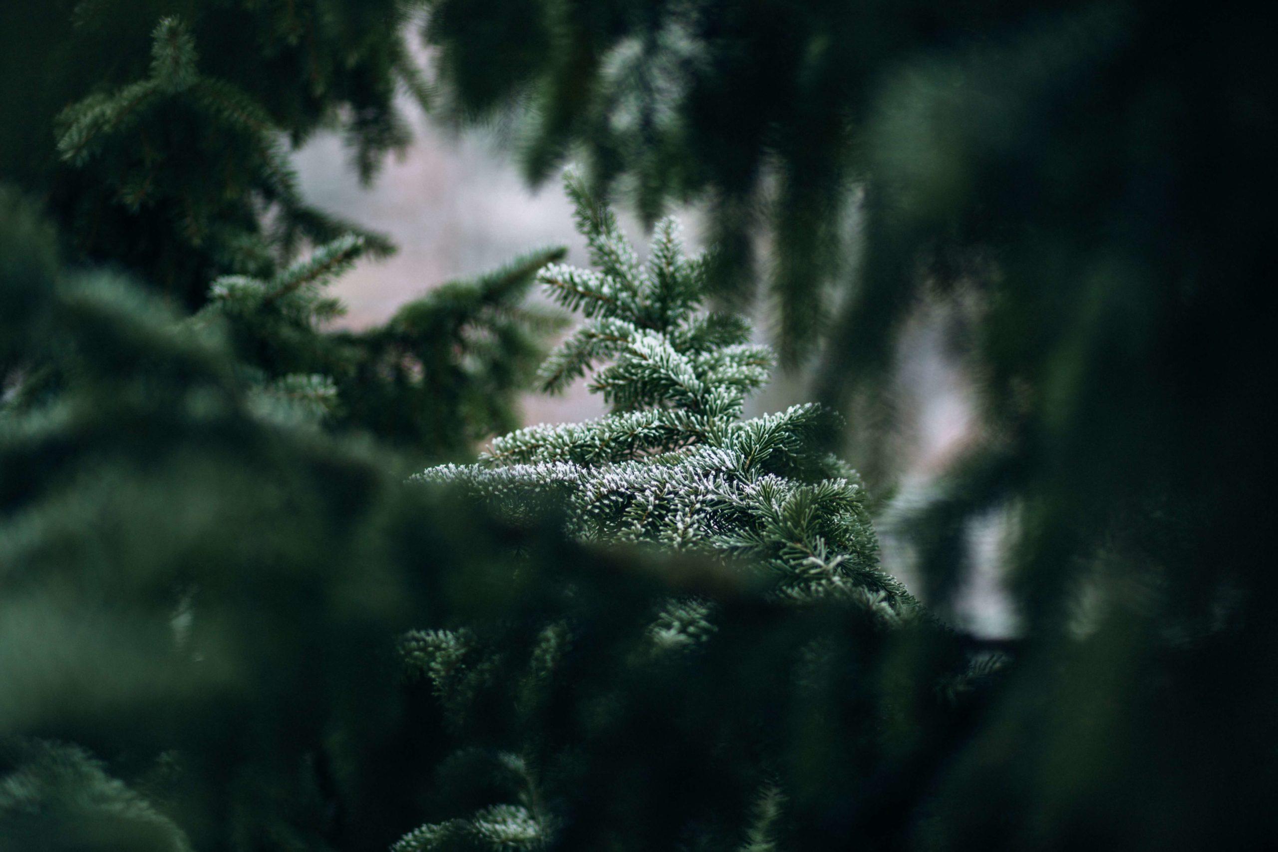green christmas with WONDA